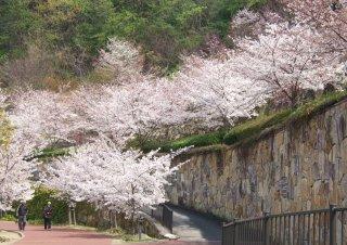 Sakura04022