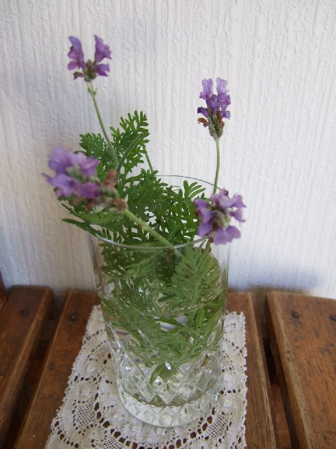 Lavender060701